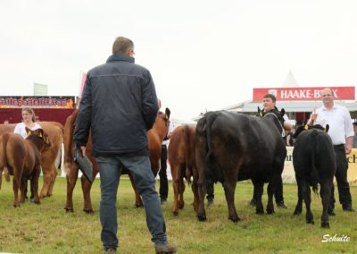 282 Siegerauswahl Angus Kühe