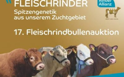 Fleischrindbullenauktion in Karow