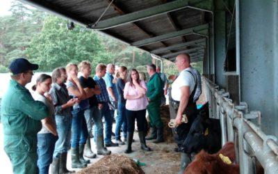 Sicherer Umgang mit Rindern