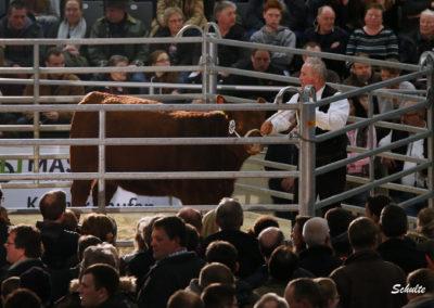 171 192 Angus Eluna Zeus 3B Geschwister Albrecht GmbH Golmbach