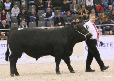 540 137 Ia Angus REA Sektor s v. Stardom s Riekenberg Heinz-Wilhelm Burgwedel