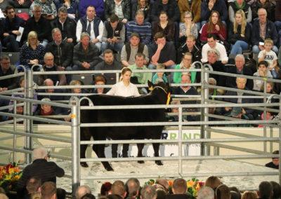 140 189 Angus Gamba s DE 03 614 12818 Stardom s Heinz-Wilhelm Riekenberg Burgwedel