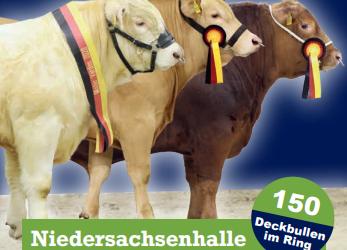 42. Niedersächsische Fleischrindertage